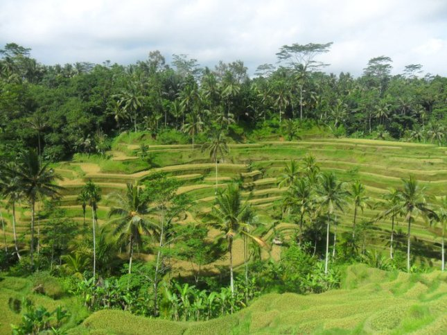 Tegallalang Rice Terraces at North Ubud in Bali, Indonesia.