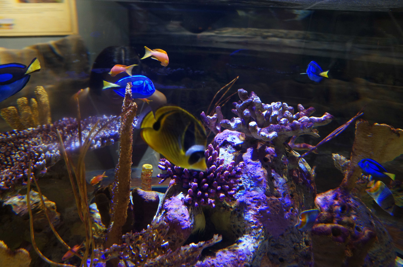 South Carolina Aquarium, Charleston - i am uniquely and ...