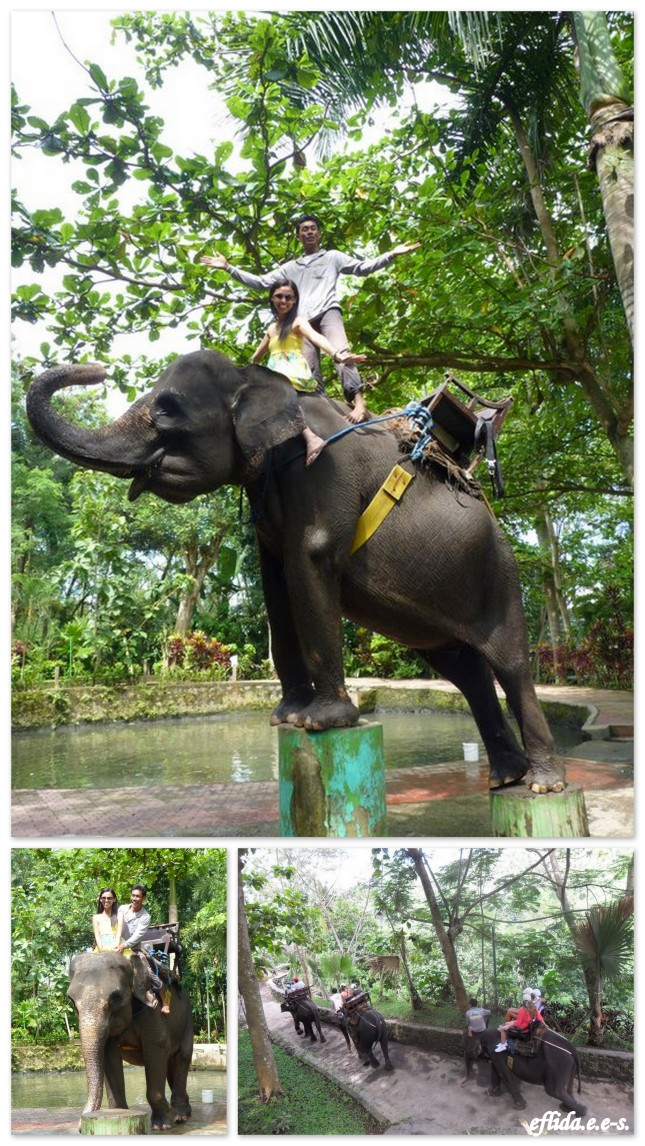Elephant ride in Bali, Indonesia.