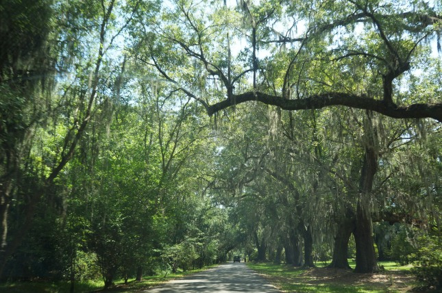 The Oak Avenue at Magnolia Plantation and Gardens in Charleston, South Carolina.