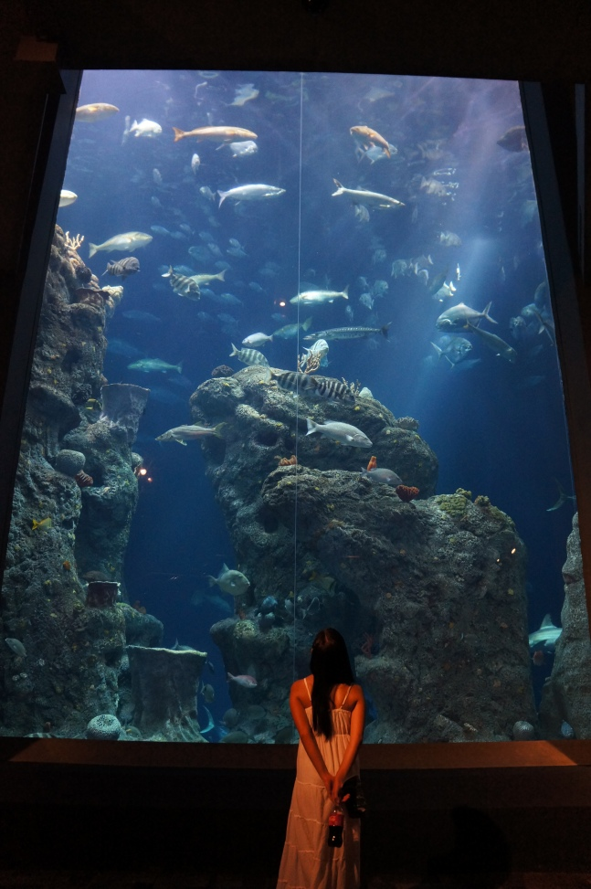 The largest tank at South Carolina Aquarium in Charleston, South Carolina.