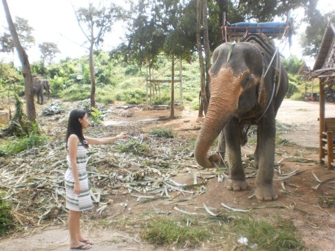 elephant feeding in Phuket, Thailand