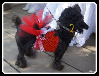 a puppy in red Victorian costume at Michigan Renaissance Faire