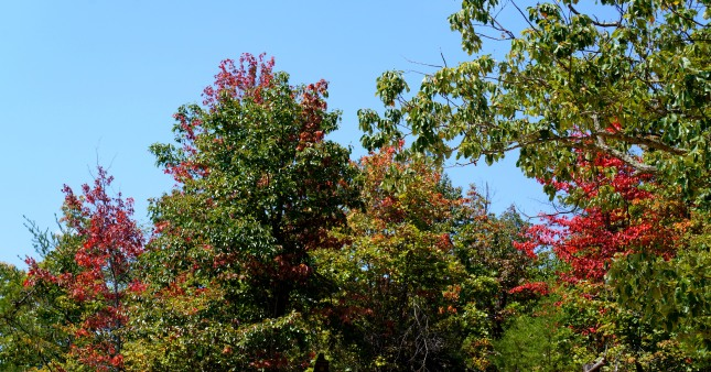 Leaves starting to change color by September at the Natural Bridge State Resort Park in Kentucky, USA.