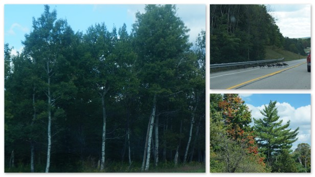 Random scenes around Northern Michigan.