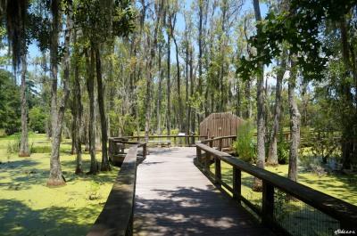 Audobon Swamp Garden