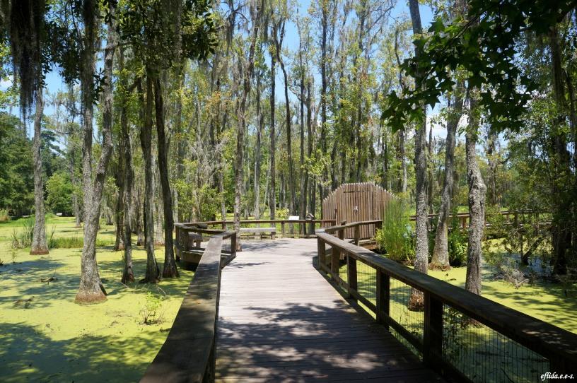 Audubon Swamp Garden Charleston South Carolina I Am Uniquely And Wonderfully Made
