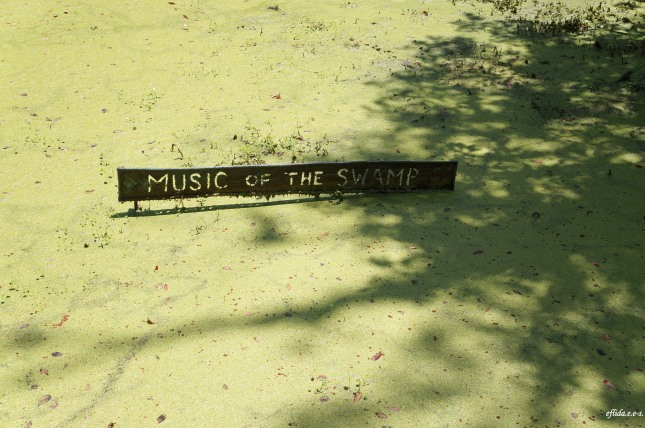 Music of the swamp at Audubon Swamp Garden in Charleston, South Carolina.