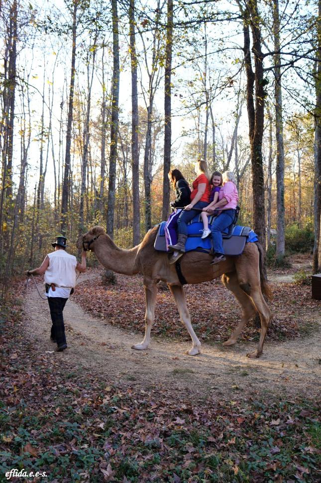 Camel ride at Carolina Renaissance Faire 2012 in Charlotte, North Carolina.