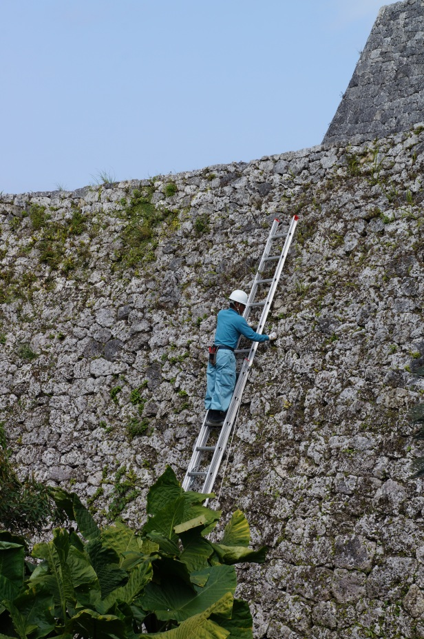 A worker doing some maintenance cleaning of the Zakimi castle ruins in Okinawa, Japan.