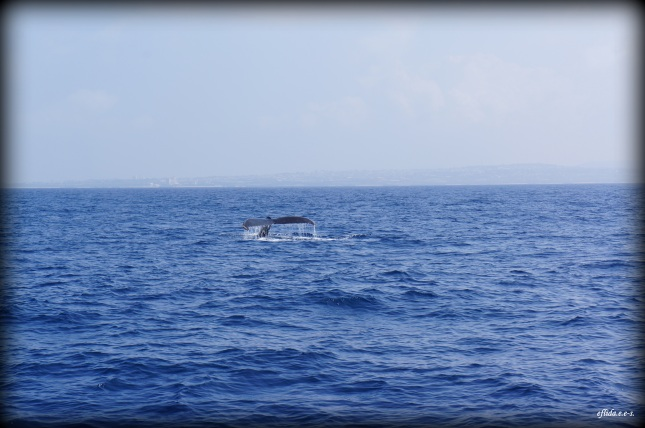 Spotted a humpback whale in Okinawa, Japan.