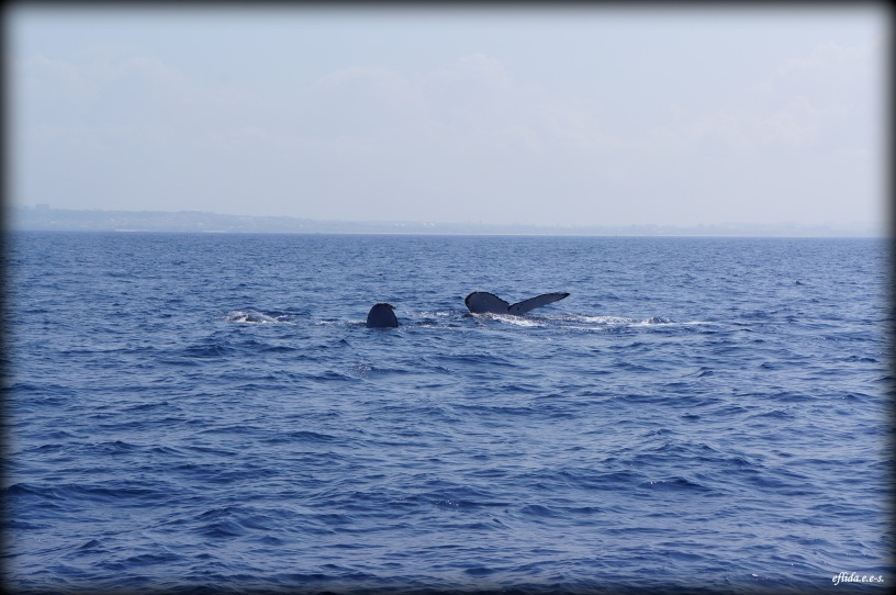 Whale Watching in Okinawa, Japan is a popular activity as they swim in the area for breeding around the months of January and April.