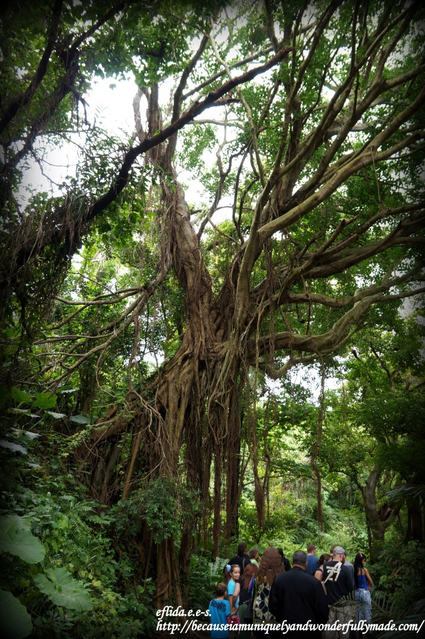 "The famous ""Walking Banyan Tree"" of Okinawa, Japan is a name given because of the tree's new roots that grew out extending itself down creating a ""new leg"" of the tree towards the river."