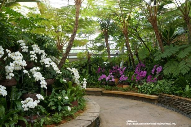 The Phalaenopsis Greenhouse inside Tropical Dream Center at Ocean Expo Park in Motobu, Okinawa, Japan has a wide display of genus Phalaenopsis or moth orchids.
