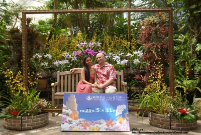 """The Cattleya Greenhouse inside the Tropical Dream Center in Ocean Expo Park at Motobu, Okinawa, Japan. Fragrant Cattleyas or """"Flower Queen"""" are in full bloom here."""