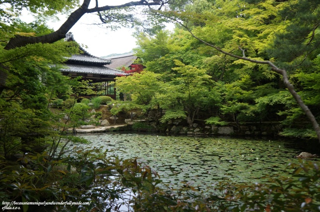 One of the two ponds at Tenjuan Temple in Kyoto, Japan inhabited by big kois.