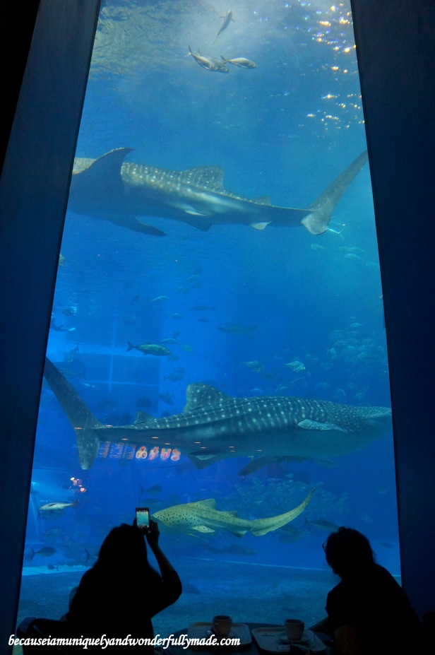 The Cafe Ocean Blue at Churaumi Aquarium in Motobu District in Okinawa, Japan offers a dining experience with a meal taken while the whale sharks and manta rays are swimming right on your side.