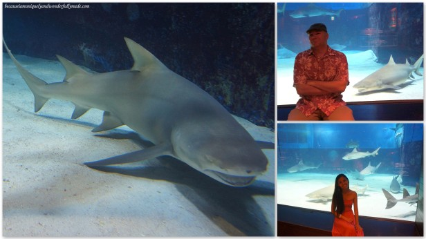 The Shark Research Laboratory at Churaumi Aquarium in Motobu District in Okinawa, Japan.