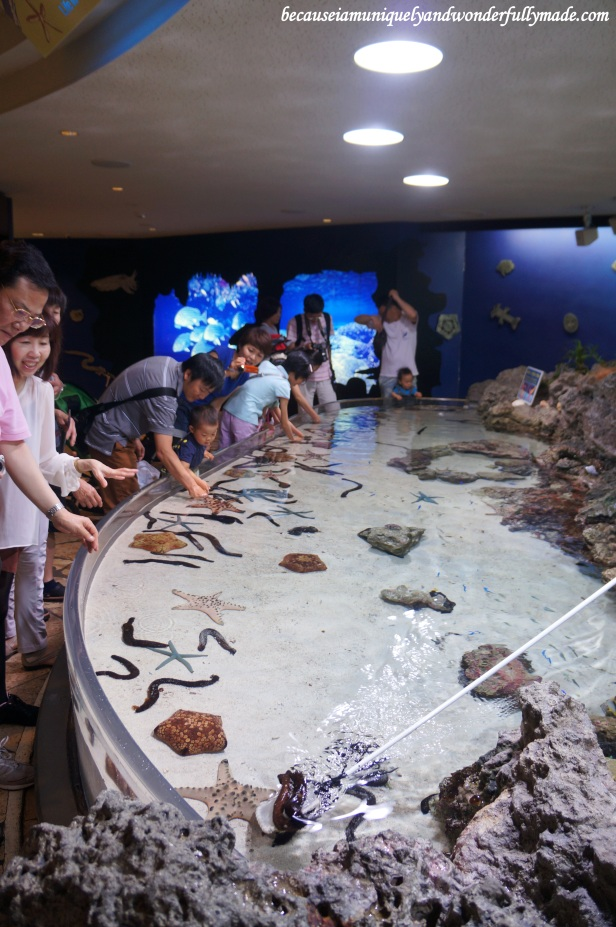 The shallow touch pool on the third floor of Churaumi Aquarium building at Motobu District in Okinawa, Japan.