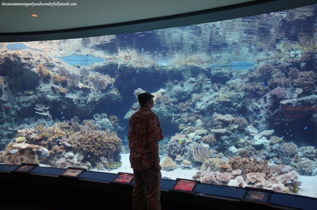 The Coral Sea tank at Churaumi Aquarium in Motobu District in Okinawa, Japan. It has no roof and is open to the sky hence the appearance of the tank and how marine creatures behave differs according to the time of the day.