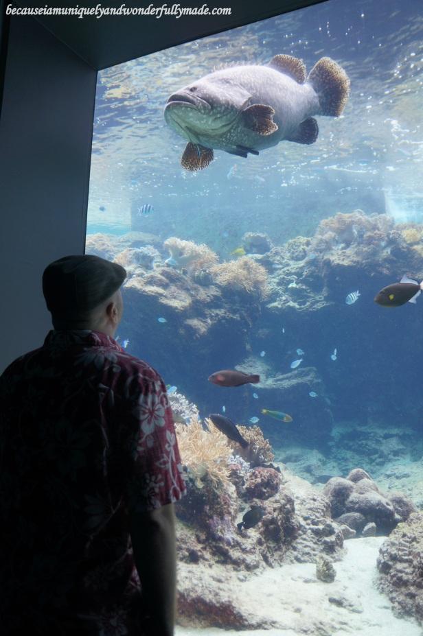 The freshwater tank at Churaumi Aquarium in Motobu District in Okinawa, Japan.