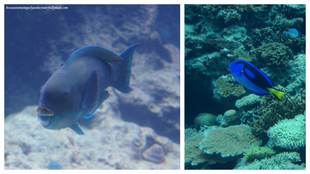 Some exhibits of marine life in one of the tanks at Churaumi Aquarium in Motobu District in Okinawa, Japan.