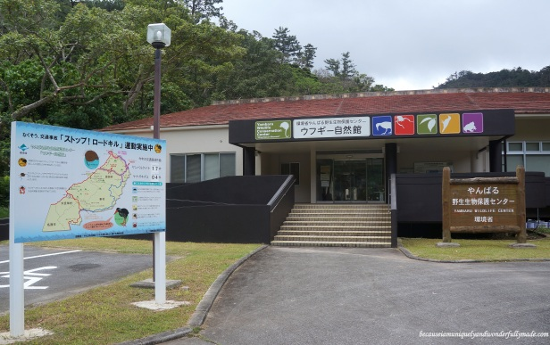 Yanbaru Wildlife Center やんばる野生生物保護センター in the northern part of Okinawa, Japan.