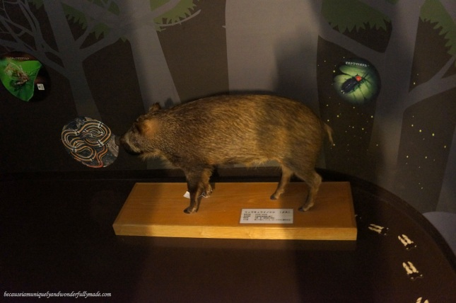 There are no live animals kept in Yanbaru Wildlife Center but the audio and visual presentations were aimed to be interactive, educational and fun like this exhibit of pseudo boar.