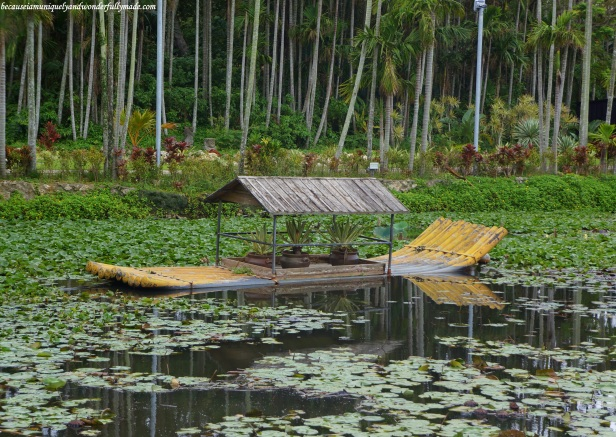 A floating garden on a lotus pond at the Water Park in Southeast Botanical Garden in Okinawa City, Okinawa, Japan. (東南植物楽園 Tōnan Shokubutsu Rakuen)
