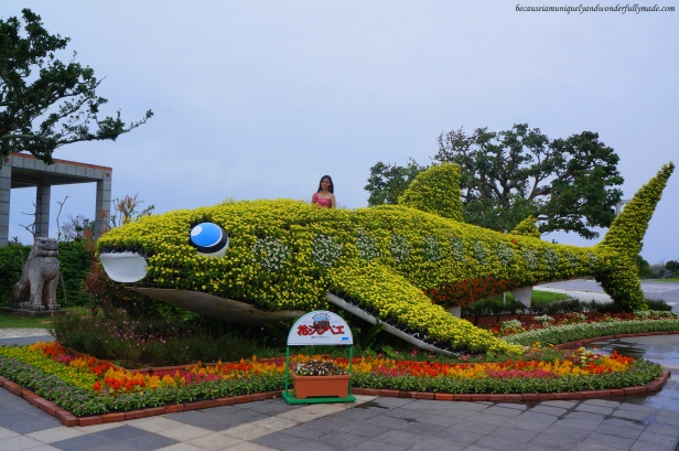 Flower Whale Shark at Ocean Expo Park in Motobu, Okinawa, Japan. 本部 朝基 , 沖縄県