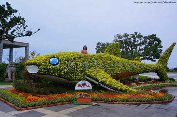 Flower Whale Shark at Ocean Expo Park in Motobu, Okinawa, Japan. 本部 朝基 , 沖縄県