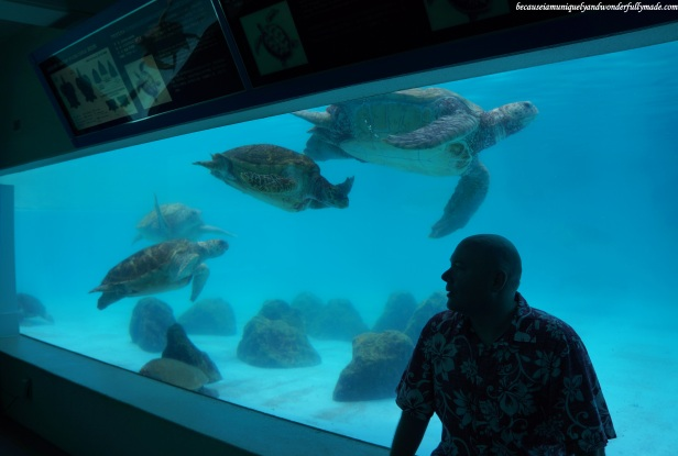 The turtle pool viewed from the underground viewing room at Ocean Expo Park in Motobu, Okinawa, Japan. 本部 朝基 , 沖縄県
