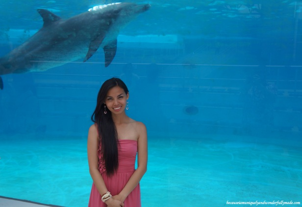 Most enjoyed by kids is the dolphin lagoon where they can see the smart dolphins up close and personal at Ocean Expo Park in Motobu, Okinawa, Japan. 本部 朝基 , 沖縄県 .