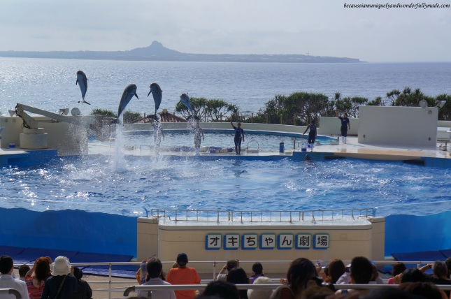 The dolphin lagoon and dolphin show at Okichan Theater at Ocean Expo Park in Motobu, Okinawa, Japan. 本部 朝基 , 沖縄県