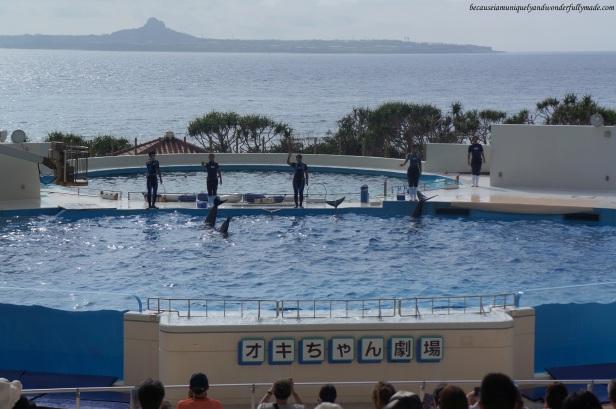 The dolphin lagoon and dolphin show at Okichan Theater at Ocean Expo Park in Motobu, Okinawa, Japan. 本部 朝基 , 沖縄県