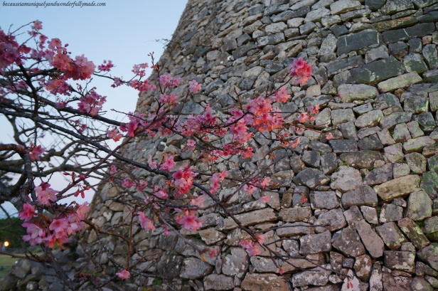 Cherry Blossom (Sakura) 桜 and the Nakijin Castle Wall 今帰仁城 in Okinawa, Japan.