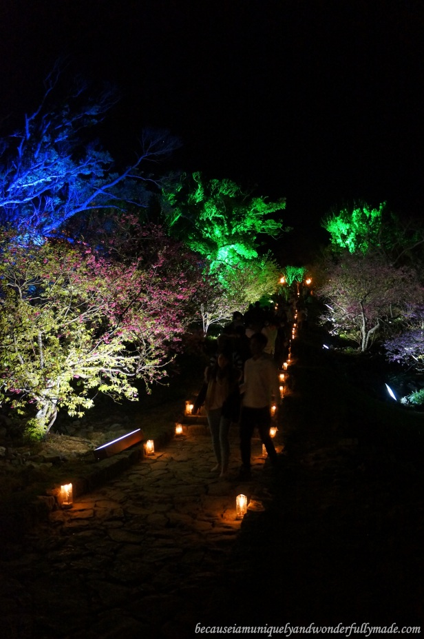 A pathway of Cherry Blossom (Sakura) 桜 and candle lights at Nakijin Castle 今帰仁城 in Okinawa, Japan.