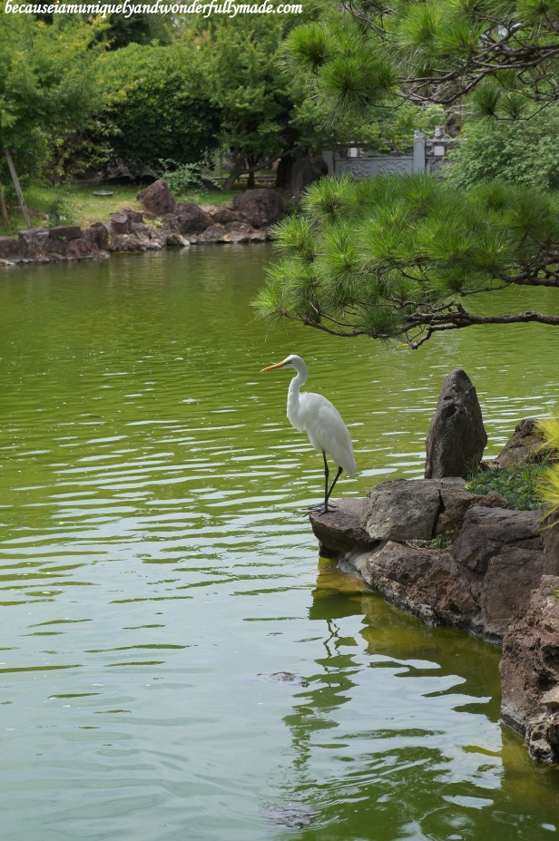 Fukushuen Garden 福州園 in downtown Naha 那覇市 Okinawa 沖縄本島,  Japan 日本国.