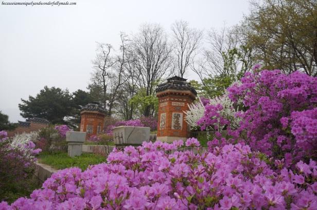 Random spring beauty at Gyeongbokgung Palace 경복궁 in Seoul, South Korea.