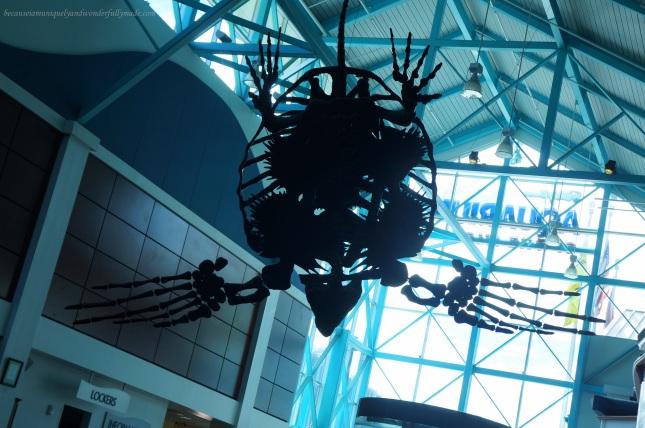 At Ripley's Aquarium of the Smokies in Gatlinburg, Tennessee.