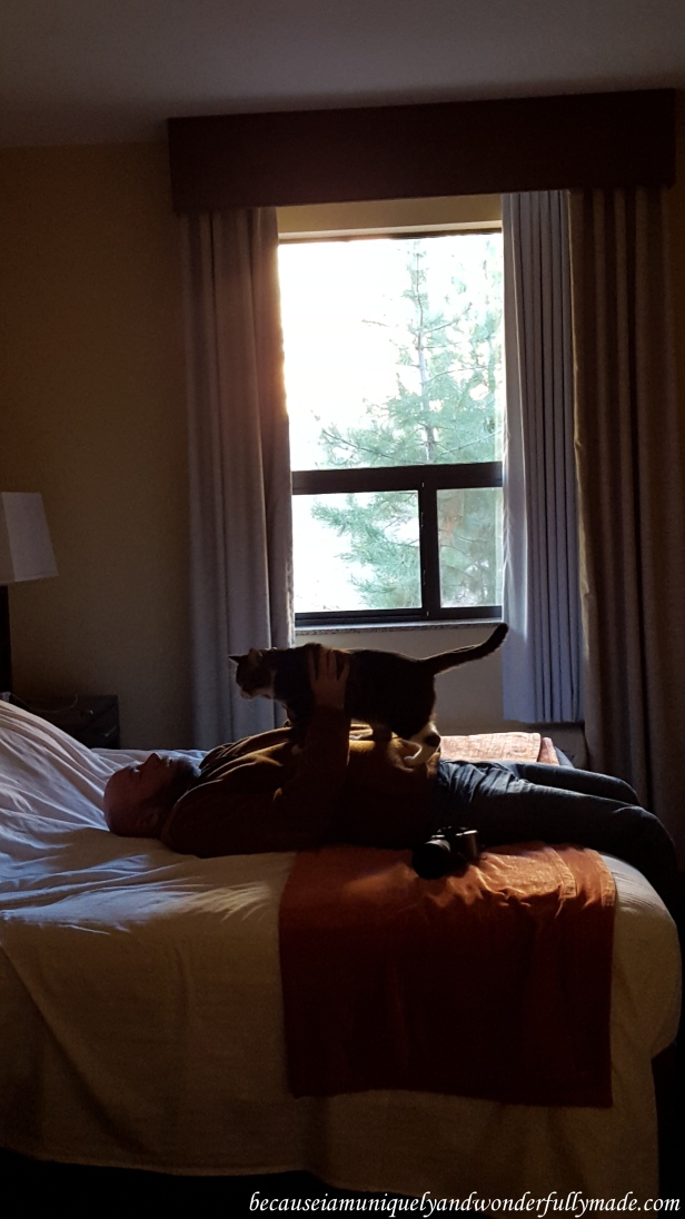 Sweet moment between my husband and our cat, Sakura Rain, before we headed out of our hotel (La Quinta) to explore Zion National Park in Springdale, Utah.