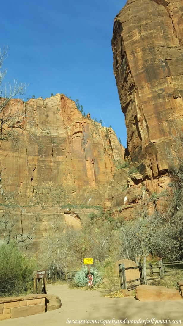 North fork of the Virgin Narrows trailhead at Zion National Park in Utah.