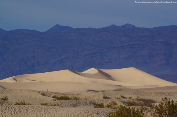 The mesmerizing Mesquite Flat Sand Dunes of Death Valley National Park in California.