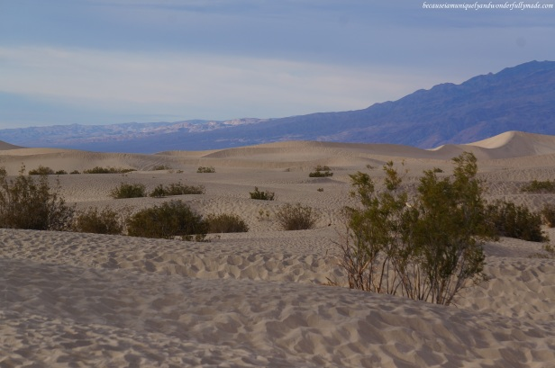 The Mesquite Flat Sand Dunes of Death Valley has been used for several movies including the Star Wars series.