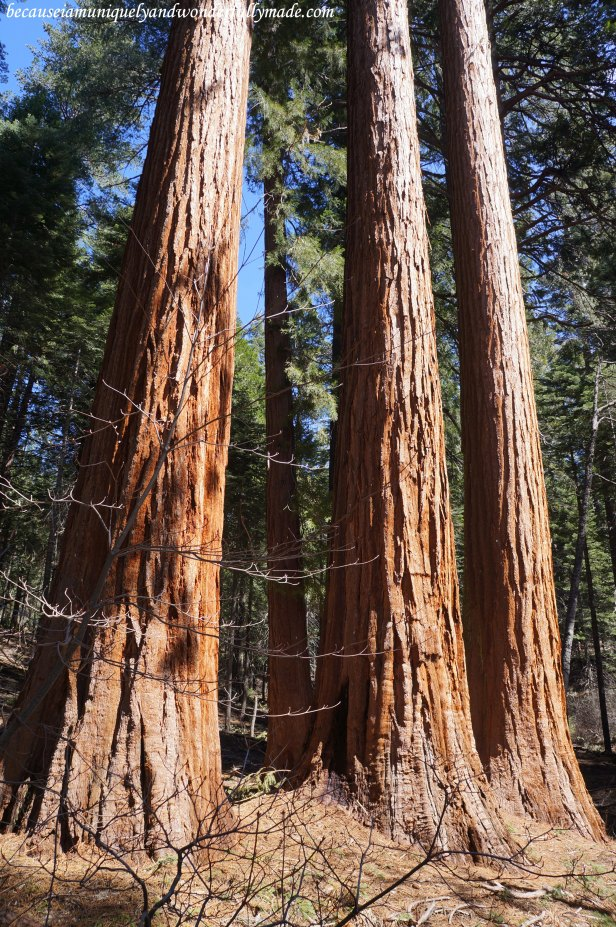 At Placer County Sequoia Grove