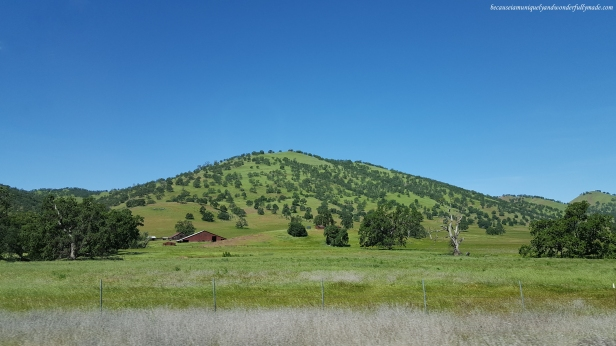 Random sights along US Highway 20 in spring when the hills are carpeted in green grass