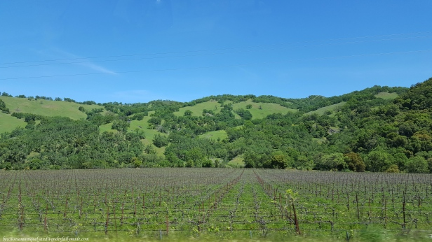 Random vineyard along US Highway 20 in spring.