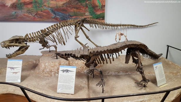 Some of the reconstructed skeletons of prehistoric animals found at Petrified Forest National Park in Arizona.