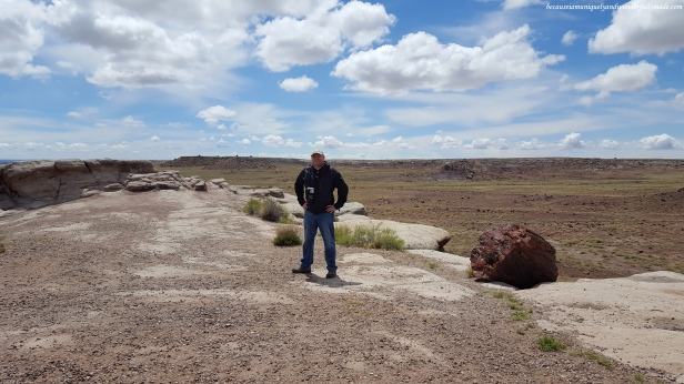Petrified Forest National Park covers about 230 square miles making it an adventure to scout for petrified specimens.