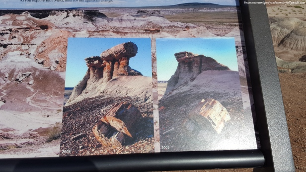 Time and erosion as agents of change. Some petrified logs, like the one in the photo, naturally broke off.